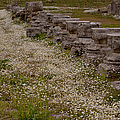 Olympia Ruins And Wild Flowers   #9678 by J L Woody Wooden
