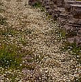Olympia Ruins And Wild Flowers   #9679 by J L Woody Wooden