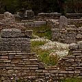 Olympia Ruins And Wild Flowers   #9684 by J L Woody Wooden