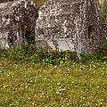 Olympia Ruins And Wild Flowers   #9821 by J L Woody Wooden