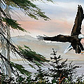 Olympic Coast Eagle by James Williamson