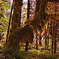 Olympic National Park - Rainforest by George Bostian