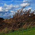On Beachy Head Plants Bow To The Wind by John Magnet Bell