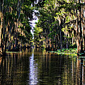 On Golden Canal by Lana Trussell