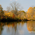 On Golden Pond 2 by Living Color Photography Lorraine Lynch