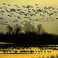 On Golden Pond by Elizabeth Winter
