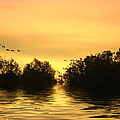 On Golden Pond by Joyce Dickens