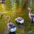 On Golden Pond by Lynn Bauer