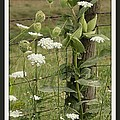 On The Fence by Brenda McGee-Paap