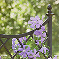 On The Fence by Kim Hojnacki