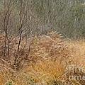 On The Heath by Carol Weitz