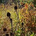 On The Prairie #4 by Jacqueline Athmann