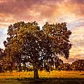 On The Prairie by Debra and Dave Vanderlaan