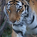 On The Prowl by Tonya Hance