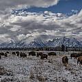 On The Range by Erika Fawcett