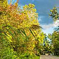 On The Road To Autumn by Steve Harrington