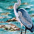 On The Rocks Great Blue Heron by Roxanne Tobaison