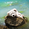 On The Rocks - Teddy Bear Art By William Patrick And Sharon Cummings by Sharon Cummings
