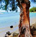 On The Shore 1. Mauritius by Jenny Rainbow