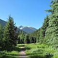 On The Trail Around Lightning Lake by Lena Photo Art