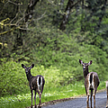 On The Way Home by Belinda Greb