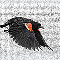 On The Wing - Red-winged Blackbird by Travis Truelove