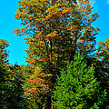 On Top Of Maple Ridge - Old Forge New York by David Patterson