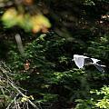 On Winged Flight by Wayne Toutaint
