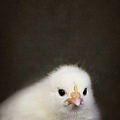 One Chick by Margie Hurwich