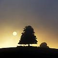 One Foggy Morning by Tim Gainey