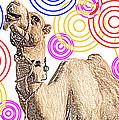 One Funky Camel by Sladjana Lazarevic