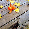 One Golden Leaf by Betty-Anne McDonald