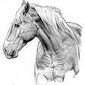 Da134 One Horse Daniel Adams  by Daniel Adams