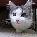 One Legged Kitty by Gary Emilio Cavalieri