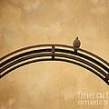 One Pigeon Perched On A Metallic Arch. by Bernard Jaubert