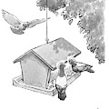 One Pigeon Speaks To Another At A House-shaped by Liam Walsh
