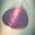 One Purple Leaf by Jan Bickerton