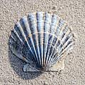 One Shell by Cathy Kovarik