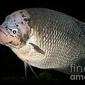 One Strange Fish by Sara  Raber