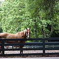 One Very Pretty Hilton Head Island Horse by Kim Pate