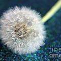 One Wish by Krissy Katsimbras