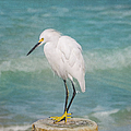One With Nature - Snowy Egret by Kim Hojnacki