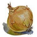 Onion by Irina Sztukowski