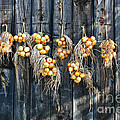 Onions And Barnboard by Barbara McMahon