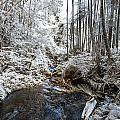 Onomea Stream In Infrared by Jason Chu