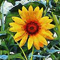 Onyx Store Sunflower by Barbara Snyder