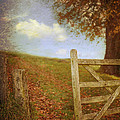 Open Country Gate by Amanda Elwell