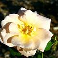 Open Flower by Darren Burton