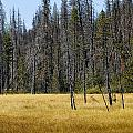 Open Meadow 2 by Rich Franco