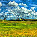 Open Pastures by SC Heffner